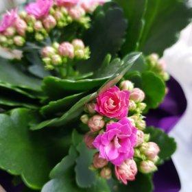 Kwiaty Doniczkowe Na Prezent Ktore Nadaja Sie Najlepiej Leaflo