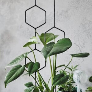 podpórka do roślin
